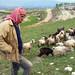 Ahmed, Shepherd