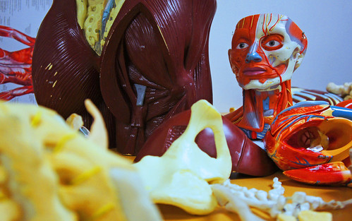 Human Anatomy Study Room