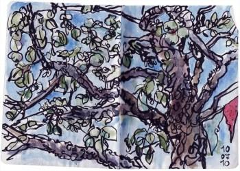 apfelbaum, 100710
