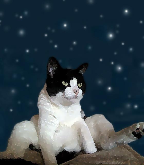 Mimi & the Stars
