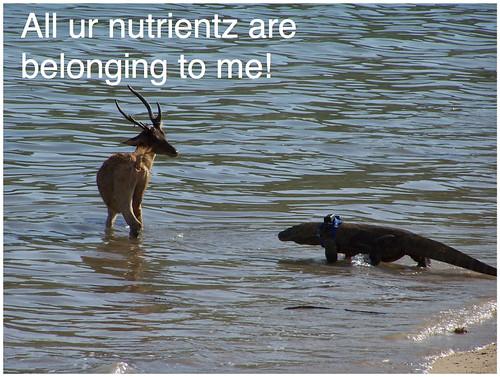 all ur nutrientz2
