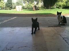 Tiny cat investigates