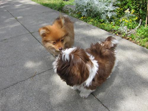 Georgie & Bella