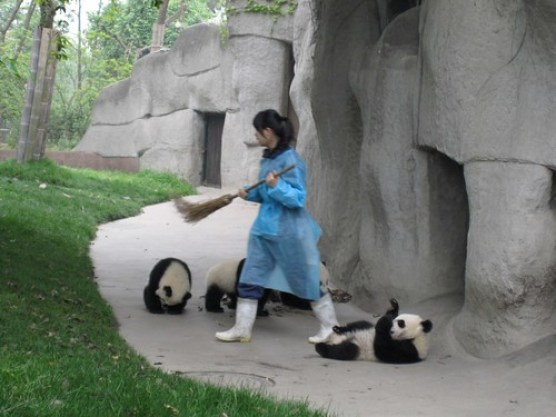 Silly Pandas!