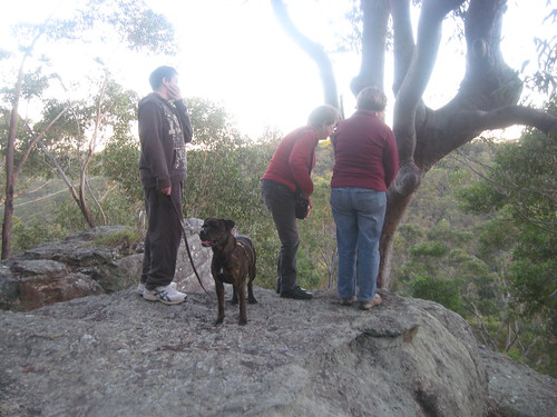 """Checking out the """"pig face tree"""""""