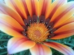 Flower closeup....