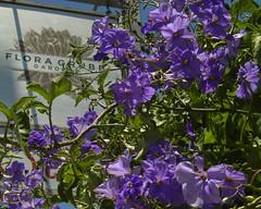 20100703_garden_floragrubb03