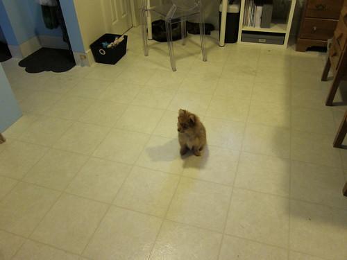Georgie Alone