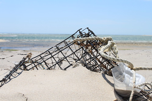 Cape Cod - Chatham Bars Inn - North Shore - Abandoned Lobster Trap
