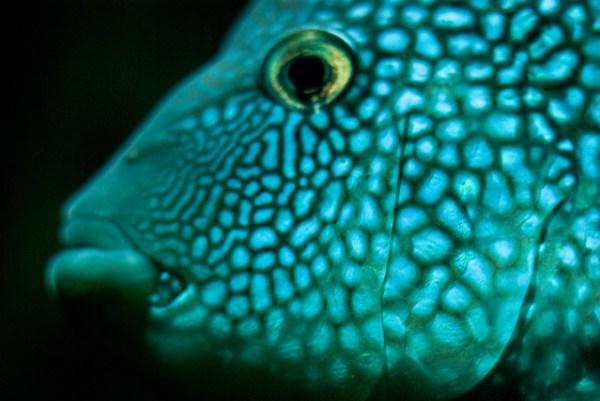 reaction diffusion fish face