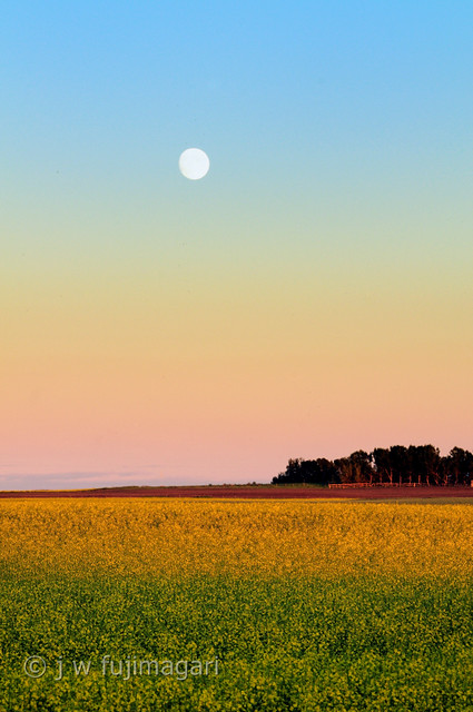 Canola and Moon