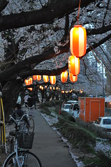Lanterns and path
