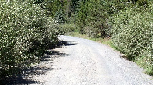 trail/road between Summit Meadow and Still Creek
