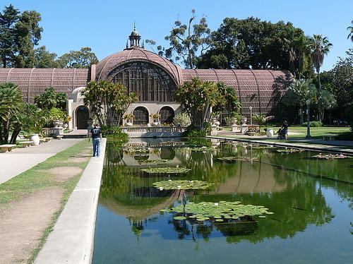Lily and lotus pond