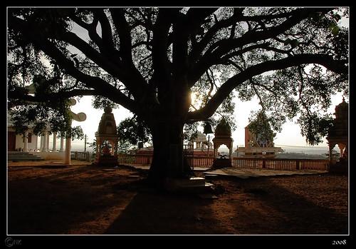 Omkar Hills | Banyan Tree