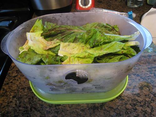 Lettuce in the Lettuce Keeper
