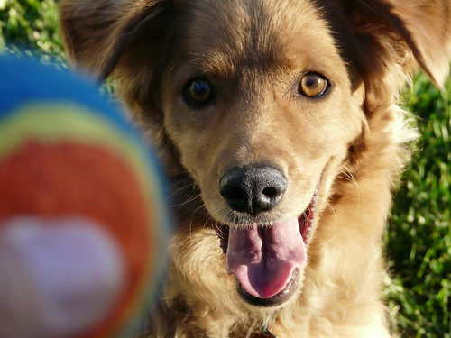 i need that ball