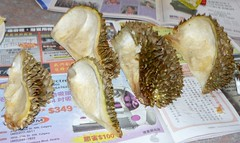 Shells of Durian (榴蓮)