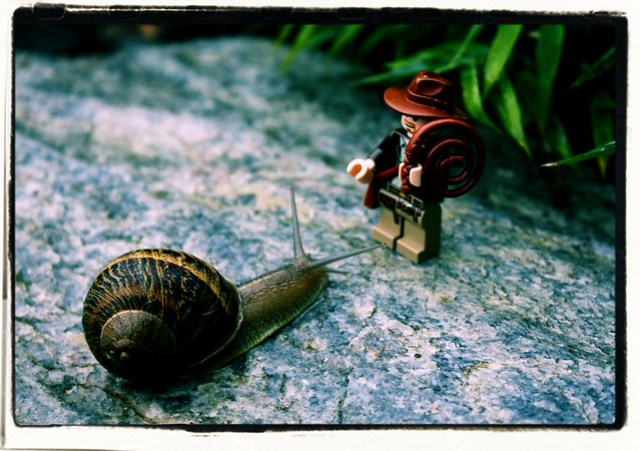Indiana Jones and the Overdeveloped Snail
