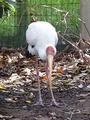 Lone stork