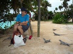 Iguanas lauern auf Beute, Ruinen von Tulum