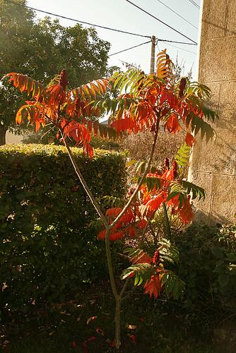 Jardin de Monic à Marchenoir (41)