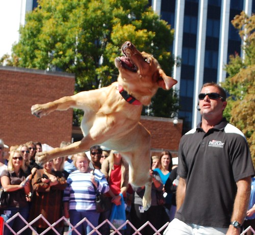 Yes, Dogs CAN Fly