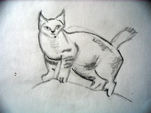 Cat, drawn with pencil