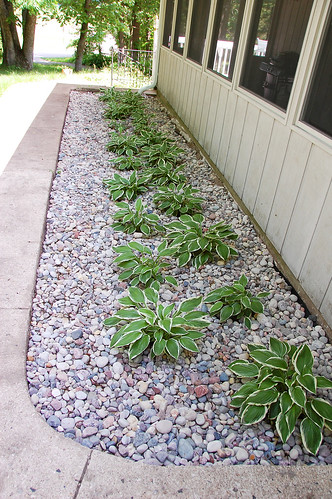 When I look at this picture I think it was the most boring flower bed ever!  Seriously, rows of hostasand not just any hosta the most boring, typical,  ...