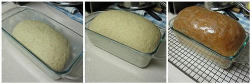bread rises