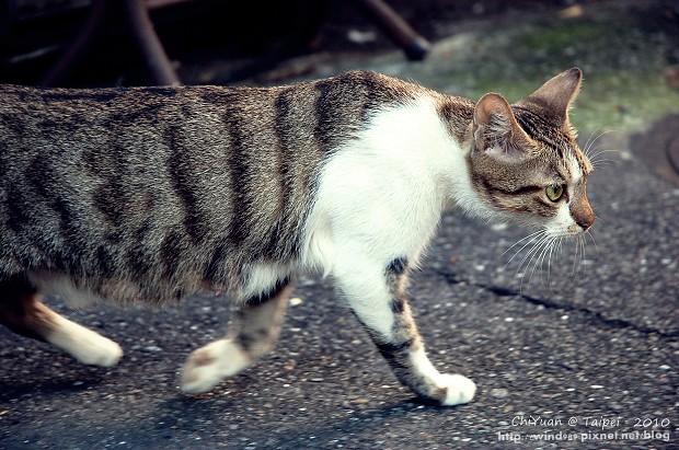 Cat。心念所至01.JPG