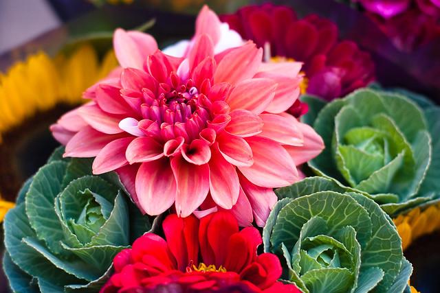 {275/365} farmers market flowers