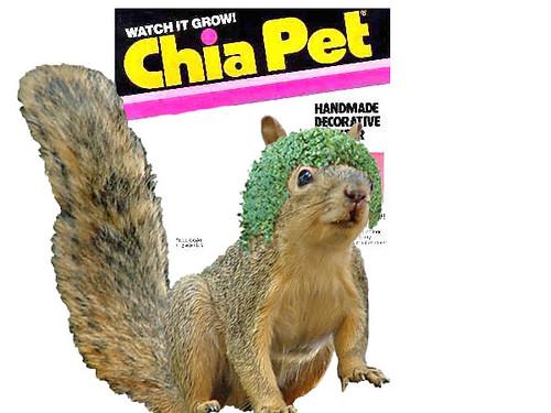 chia squirrel