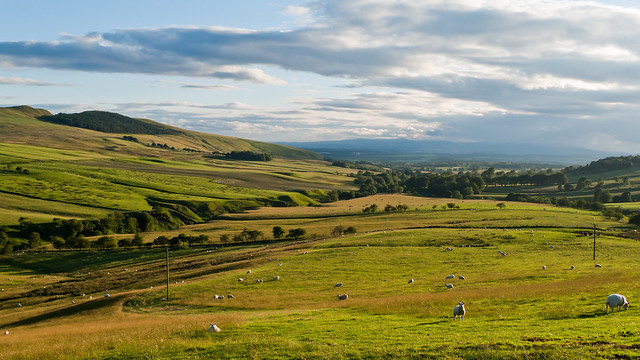 Fife View