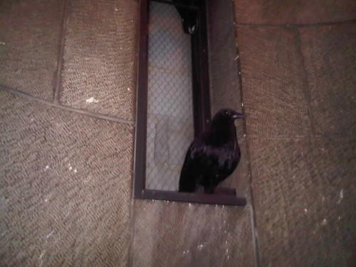 2010.10.03 Raven