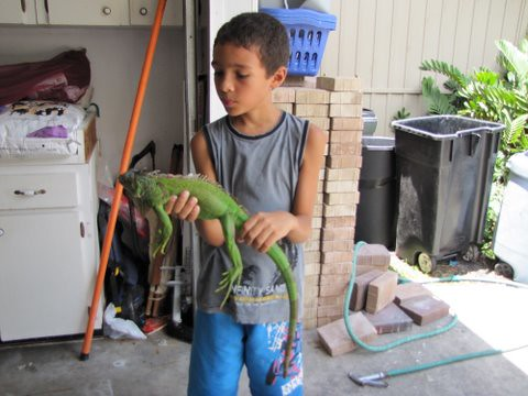 Mikey Holds the Lizard