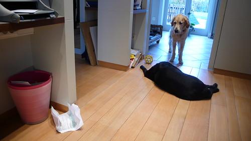 Valéas kijkt naar de papieren die naast de prullenmand gevallen zijn terwijl Eiko parmantig in de weg blijft liggen