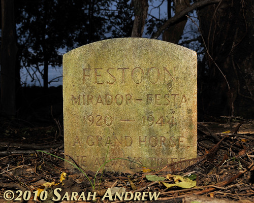 Festoon 1920-1944: A Grand Horse... He Always Tried