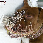 FATTY and the Porcupine