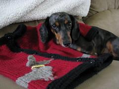 Jackson Dachshund Sweater