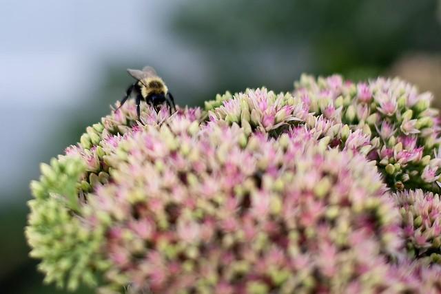 {247/365} bee