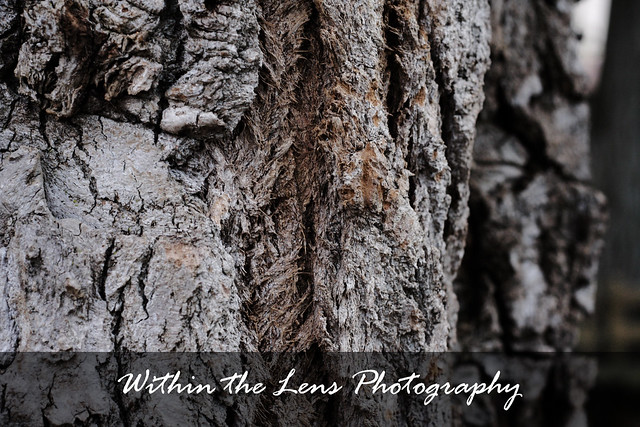 tree trunk, tree, trunk, bark, tree bark, within the lens, photography