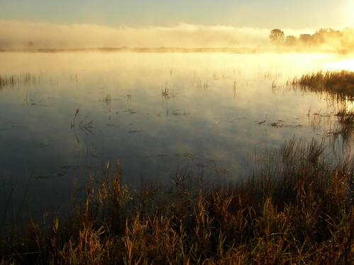 Dawn: fog over Necedah Refuge