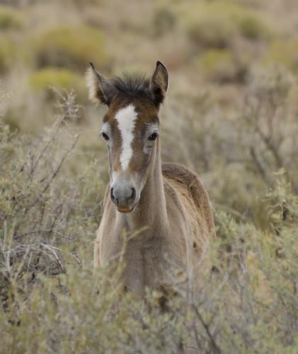 NM Wild Horses (52) nwm