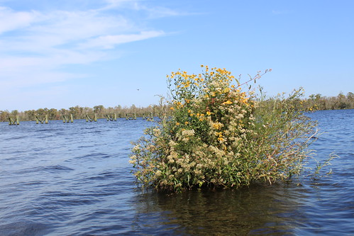 Kayaking - Pasquotank River - Oasis of Wildflowers
