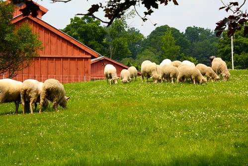 SheepShares 2010