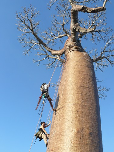 Climbing up the Baobab Tree
