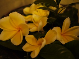 Frangipani arrangement - a Balinese favorite flower