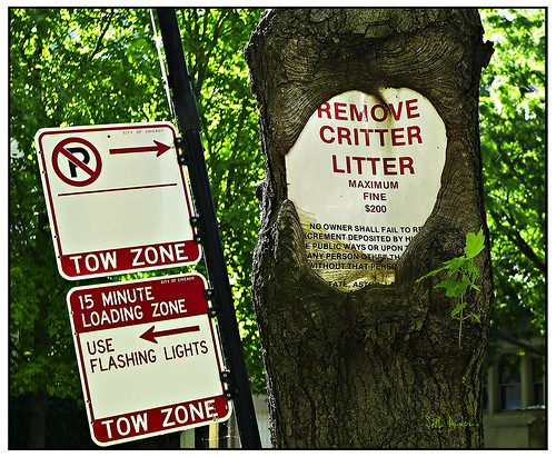 Remove Critter Litter