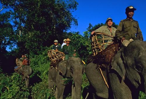 Alan Rabinowitz Rides an Elephant